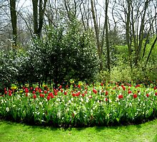 Reds in the Bed - Tulips in the Keukenhof Gardens by kathrynsgallery