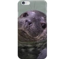 Common Seal Pup iPhone Case/Skin