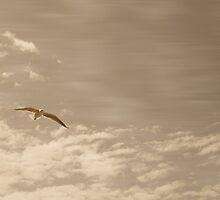 Solo Flight by tenzil