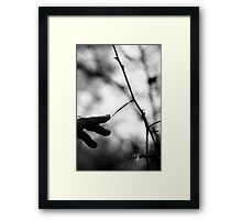 Once Upon A Dream. Framed Print