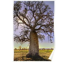 The Boab Tree -  Kimberley - WA Poster