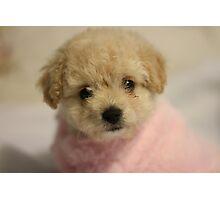 Portrait of a puppy Photographic Print