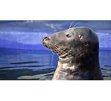 Common Seal Photographic Print