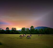 Kiger Mustangs On The Run by Charles & Patricia   Harkins ~ Picture Oregon