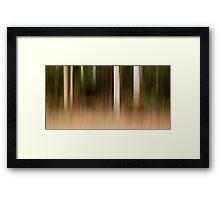 Eucalypts - Hollybank Forest, Tasmania Framed Print