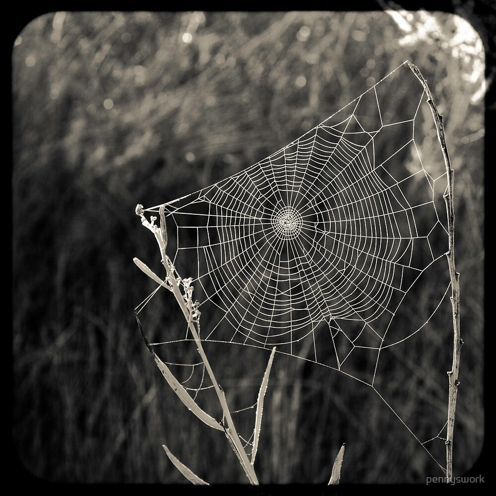 Spider Web 2 by pennyswork