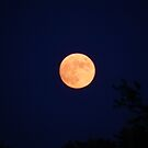 Almost Full Strawberry Moon by Melissa Carlini