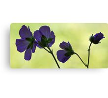 Wild Geranium - Morning Light Canvas Print