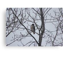 Winter Falcon Canvas Print