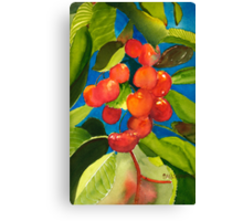 Rainier Rubies Canvas Print