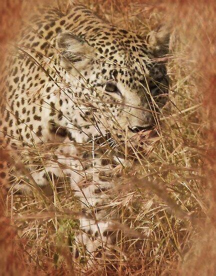 Stalking Leopard by Linda Sparks