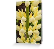 Lovely Lemon Lupin Greeting Card