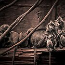 Silver leaf Monkeys in the style of Dorothea Lange by alan shapiro