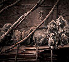 Silver leaf Monkeys in the style of Dorothea Lange by alan shapiro