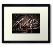 Silver leaf Monkeys in the style of Dorothea Lange Framed Print
