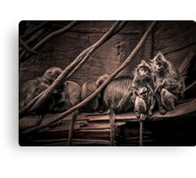 Silver leaf Monkeys in the style of Dorothea Lange Canvas Print