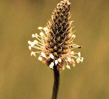 Flower by peter Jensen