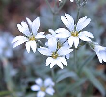 Flowers by peter Jensen