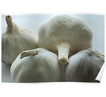 Garlic Bulbs Poster