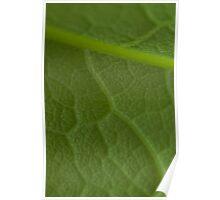 Veined Leaf Poster