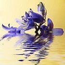 Blue ripples by shalisa