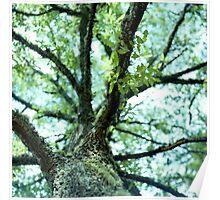 Dawyck Gardens, Near Peebles, Scottish Borders Poster
