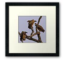 Vulture Trio Framed Print
