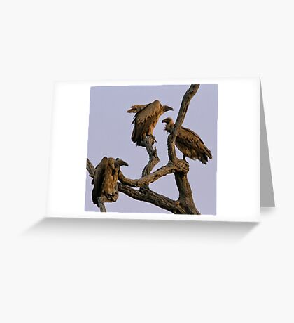 Vulture Trio Greeting Card