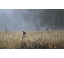 Kangaroo's in the Mist Photographic Print