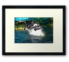 Orca Whales Framed Print