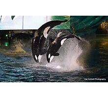 Orca Whales Photographic Print