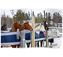 Horses in a row Poster