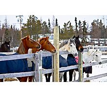Horses in a row Photographic Print