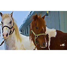 winter horses Photographic Print
