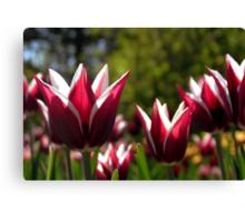 Tulips 7 Canvas Print