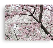 Cherry Blossoms 10 Canvas Print