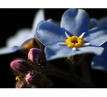 Forget-Me-Nots 2 Photographic Print