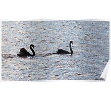 Black Swans Poster