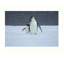 Grumpy little penguin Art Print