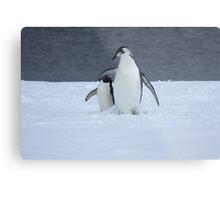 Grumpy little penguin Metal Print