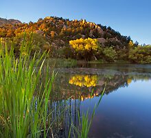 Reflections and Reeds by Bob Larson