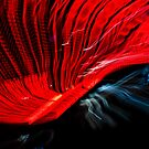 Red by amko