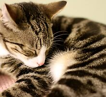 Sleepy Cutie Cat by Debbie-anne