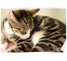 Sleepy Cutie Cat Poster