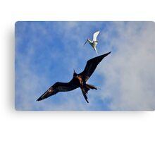 Frigatebird Chasing Tern Canvas Print