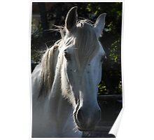 White horse 1790 Poster
