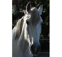 White horse 1790 Photographic Print
