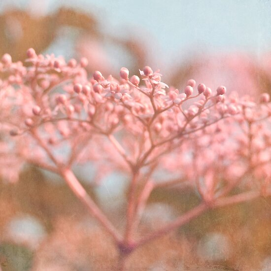 dreamy floral abstract by Iris Lehnhardt