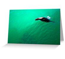 Sea Lion: Galapagos Greeting Card