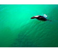 Sea Lion: Galapagos Photographic Print